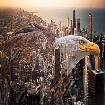 Eagle, Bird, Nature, Wildlife, Photography, Animals