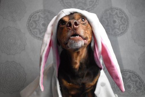 Rabbit Ears, Easter Pictures, Easter Dog, Dog Easter
