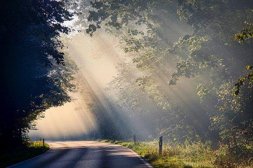 Fog, Sunbeam, Road, Trees, Mood, Landscape, Autumn