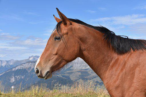 Horse, Horse Bai, Equine, Nature, Prairie, Ruminant