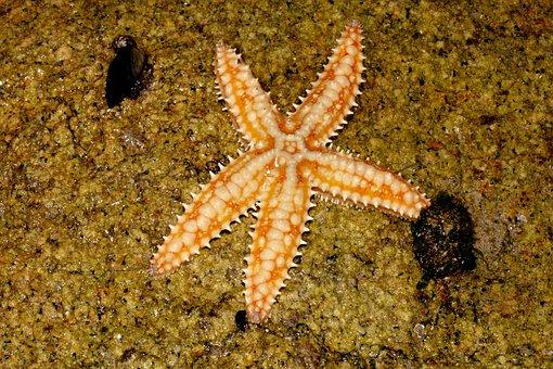 Starfish, Beach, Mar, Water, Summer, Nature, Sand