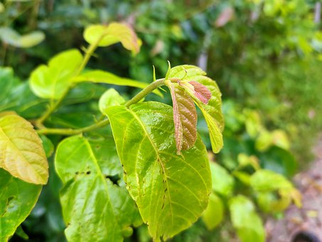 Plants, Tree, Green, Nature, Leaves, Growth, Summer