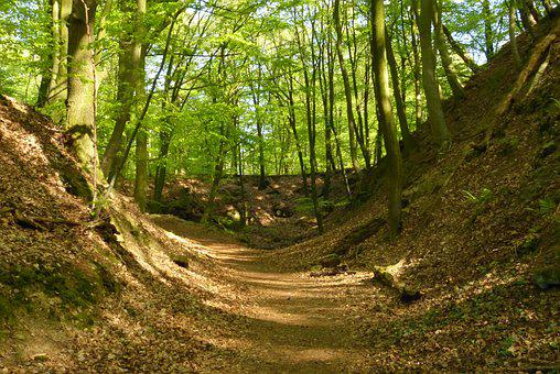 Forest, Away, Landscape, Trees, Trail, Path, Hiking
