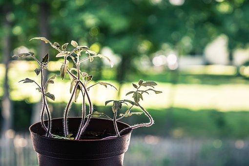 Plant, Green, Light, Nature, Mood, Sun, Window, Rays