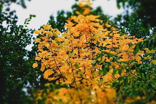 Leaves, Tree, Autumn, Beginning Of Autumn