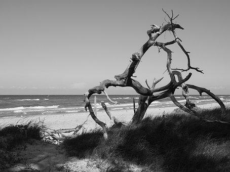 West Beach, Darß, Darss, Baltic Sea, Darss Forest