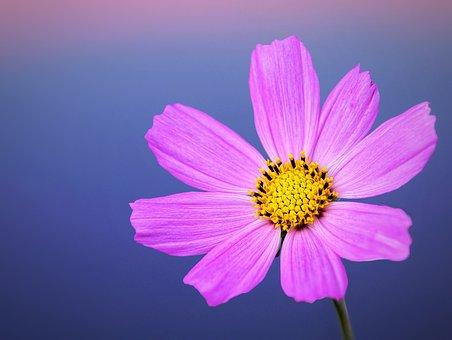 Blossom, Bloom, Flowers, Garden, Bees, Nectar, Pink
