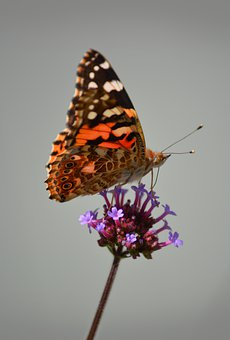 Nature, Butterfly, Insect, Wing, Colorful, Wings