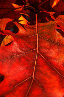 Leaf, Foliage, Autumn, Red, Nature, Colorful