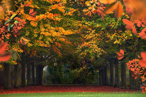 Forest, Autumn, Leaves, Color, Halloween, Fall Foliage