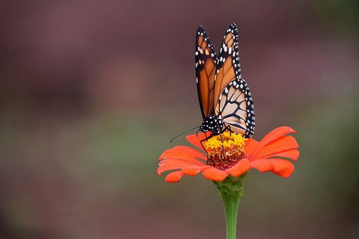 Butterfly, Flower, Insect, Garden