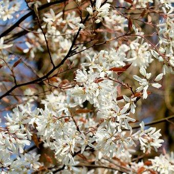 Pink, Spring, Flowers, Nature, Flowering, Birthday