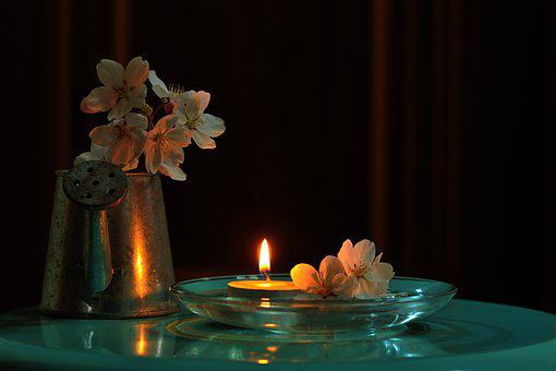 Flowers, Cherry Blossom, Candlelight, Potted Plant