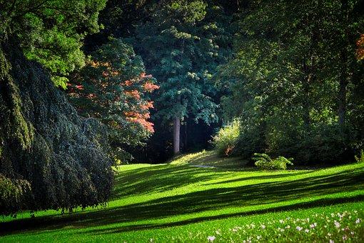 Forest, Park, Nature, Autumn, Environment, Grass