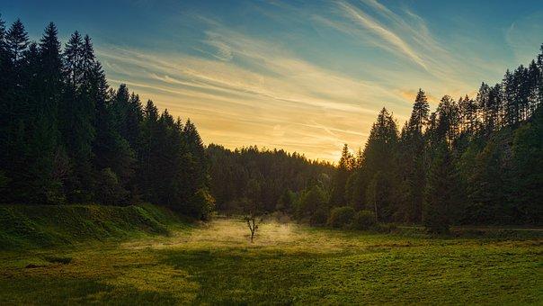 Fog, Evening, Rest, Nature, Landscape, Forest, Mood