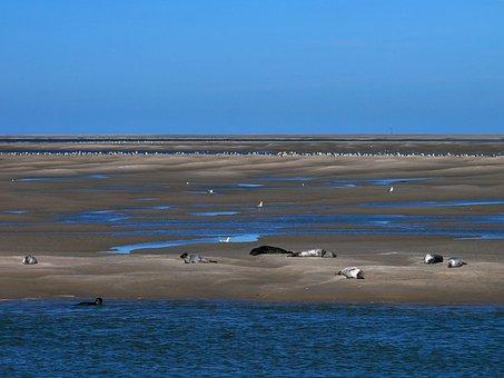 Bay Of Somme, Sea, France, Landscape, Beach, Blue