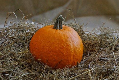 Pumpkin, Autumn, Harvest, Fruit, Halloween, Holiday