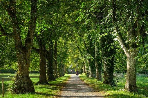 Avenue, Away, Nature, Trees, Landscape, Autumn, Mood