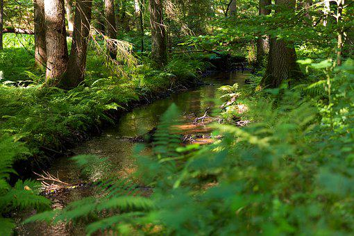 Forest, Bach, River, Palatinate, Louder, Nature, Creek