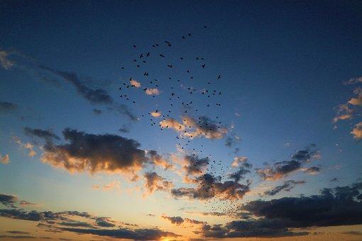 Birds, Sunset, Nature, In The Evening, Sky, Solar