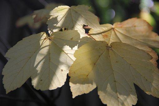 Autumn, Leaves, Mood, Maple, Light, Sun, Yellow, Nature