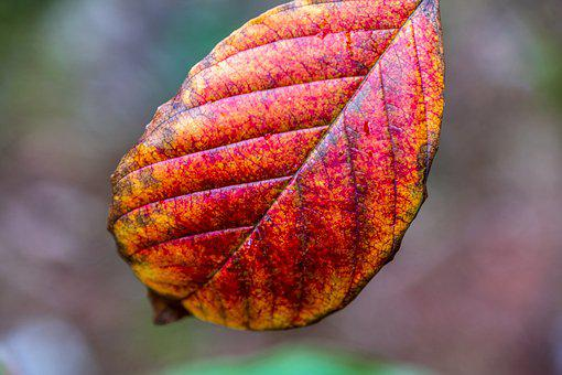 Leaf, Autumn, Nature, Fall Color, Colorful, Pattern