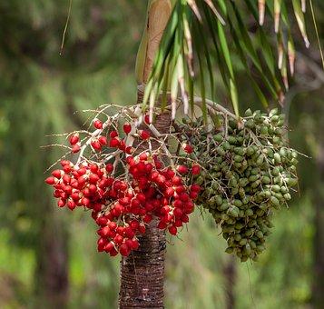 Coffee Seeds, Coffee Plant, Wild Coffee, Bean, Seed
