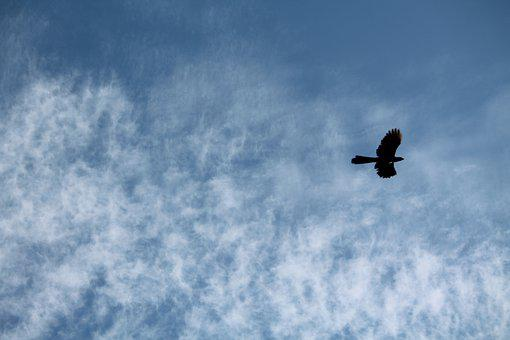 Sky, Bird, Flying, Blue, White Clouds, Pattern, Serene