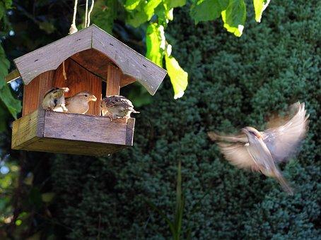 Bird, Garden, Sparrow, Songbird, Small Bird, Sitting