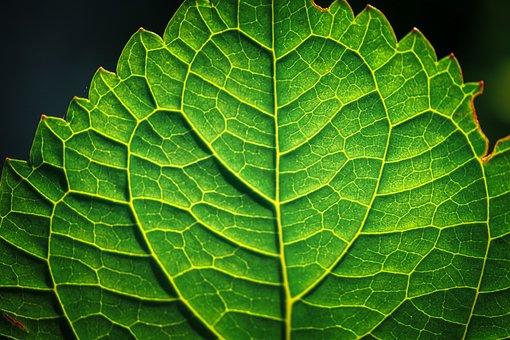 Leaf, Veins, Pattern, Close Up, Plant, Green, Structure