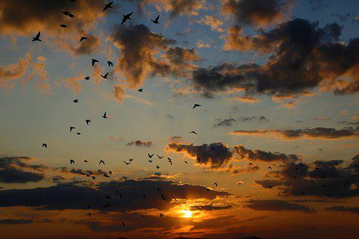 Birds, Sunset, In The Evening, Dawn, Red, Solar, Clouds