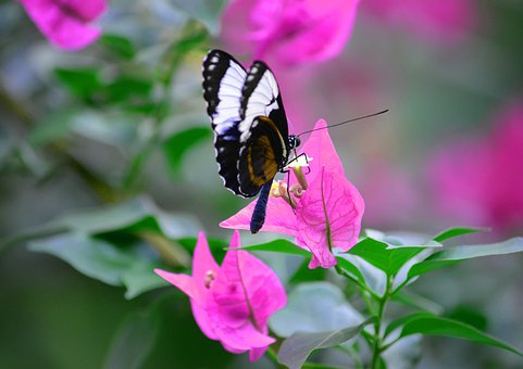 Nature, Butterfly, Insect, Wing, Green, Colorful, Wings