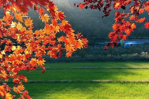 Autumn, Autumn Leaves, Leaves, Wood, Nature, The Leaves
