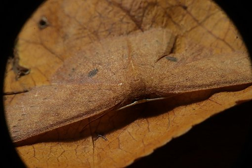 Moth, Insect, Nature, Lepidopteran, Plague, Wood