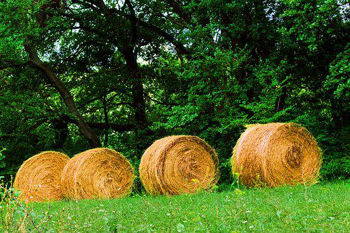 Nature, Straw, Hay, Agriculture, Field, Summer