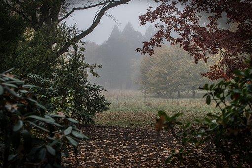 Autumn, Landscape, Nature, Trees, Fog, Mood, Haze