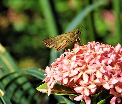 Butterfly, Big Eyes, Insect, Cute, Flower, Feeding
