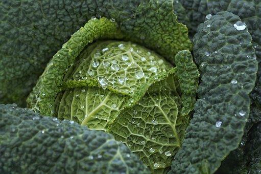 Cabbage, Kale, Vegetables, Healthy, Harvest, Raindrop