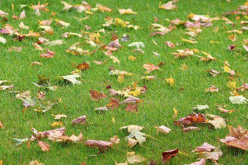 Meadow, Leaves, Grass, Autumn, Favor, Nature, Green
