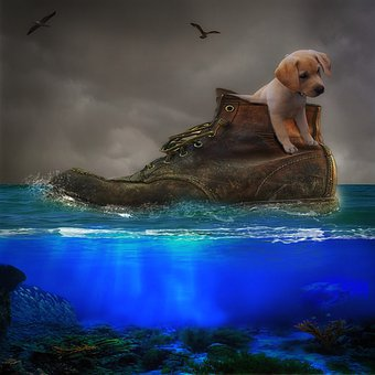 Dog, Shoe, Sea, Nature, Puppies, Animal, Fish, Turtle