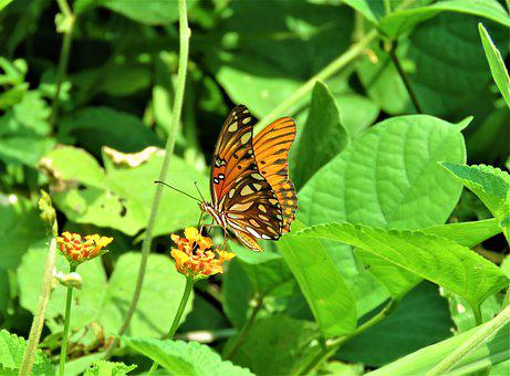 Butterfly, Orange, Flower, Nectar, Feeding, Insect