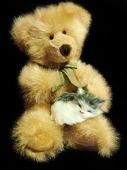 Teddy, Bear, Toy, Fluffy, Kitten, Cute, Animals