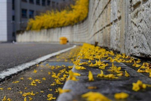 Forsythia, Spring, Spring Rain, Yellow, Nature, Plants