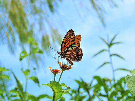 Butterfly, Nature, Scenery, Garden, Flower, Nectar
