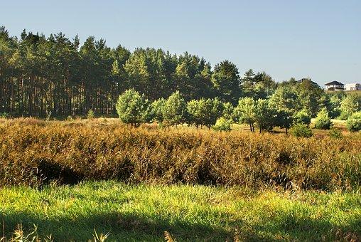 Field, Grass, Meadow, Nature, Landscape, Green