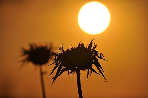 The Sun, West, Sky, Yellow, Twilight, Nature, Light