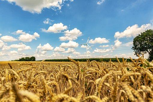 Wheat Field, Summer, Sun, Palatinate, Sachsen, Wheat