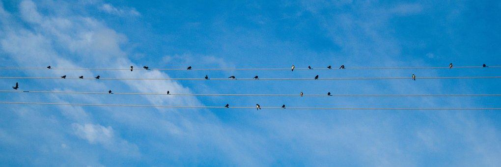 Sky, Birds, Animal, Nature, Clouds, Fly, Flight, Pity