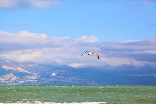 Seagull, Lake, Nature, Water, Sky, Bird, Clouds, Flying