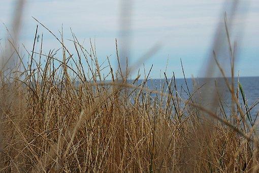 Beach, Sea, Vacations, Water, Summer, Ocean, Landscape